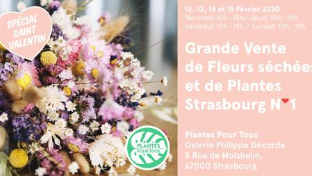 Saint- Valentin : Grande vente de fleurs séchées