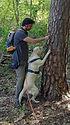 Gassi Spass Baum 1.jpeg