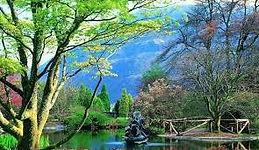 Amazing Benmore Botanic Gardens