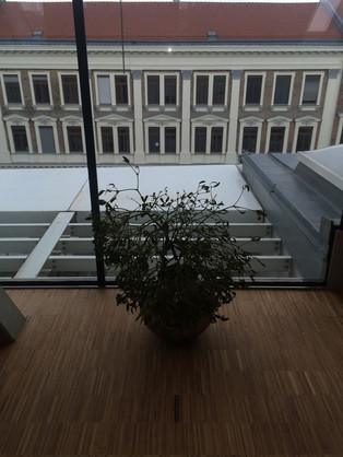 Pflanze 5.OG