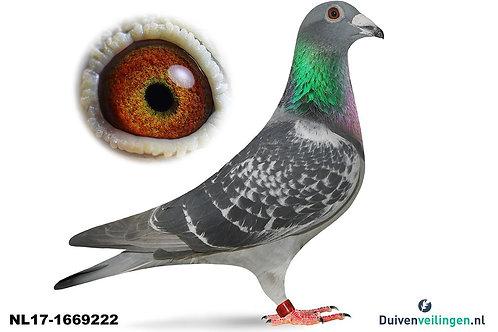 NL17-1669222 (Dek-Buijk)