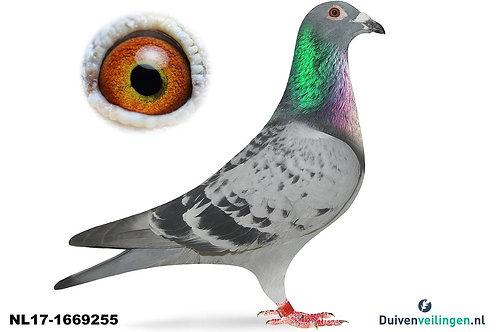 NL17-1669255 (v/d.Ree-Paauwe)