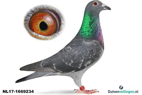 NL17-1669234 (Eijerkamp-Jellema)