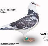 NL-18-1818950.jpg