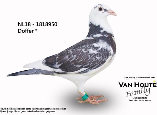 "*NEW TRANFERT* ""WILLY"" Original Fam.van HOUTEN, IJsselstein (NL)."