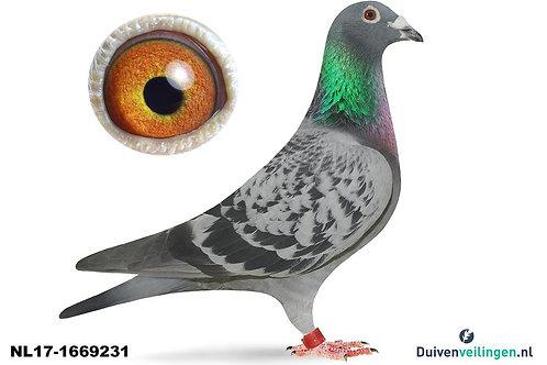 NL17-1669231 (Walpot-Hijweege)