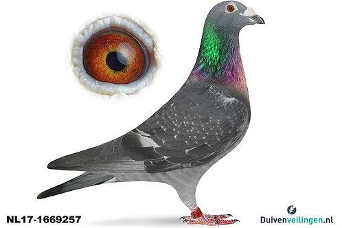 NL17-1669257 (Walpot-Comb.Poll)