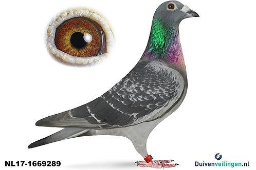 NL17-1669289 (van Dommelen-Steketee-Buijk)