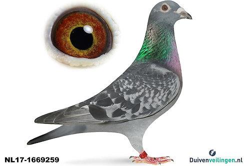 NL17-1669269 ( Jelleme-Roobol-Eijerkamp-Verdeyen)