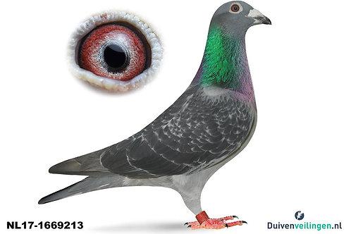 NL17-1669213 VAN WANROY Pf.DROGBA x Inteelt DAXTER