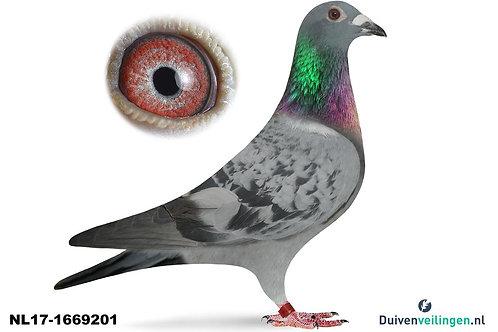 NL17-1669201(Walpot-de Heide-de Weerd)