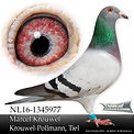 NL-16-1345977.jpg