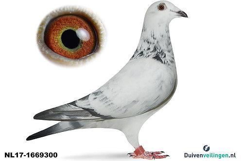 NL17-1669300 (Vanloon-De Klak)