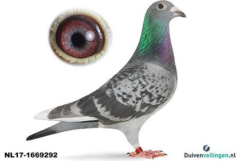 NL17-1669292 (Buijk-Hijweege)