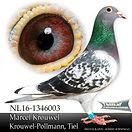 NL-16-1346003.jpg