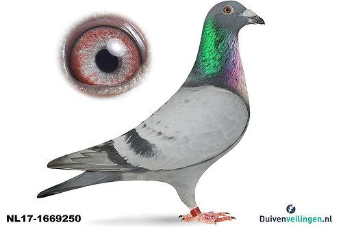 NL17-1669250 (De Klak)
