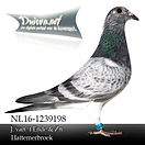 NL-16-1239198.jpg