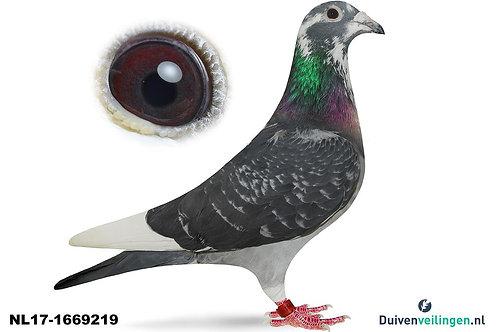 NL17-1669219 (Paauwe-van Wanroy)