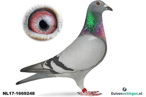 NL17-1669248 (Vanloon-Janssen)