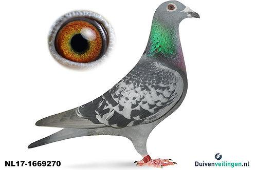 NL17-1669270 (Walpot-Hijweege)