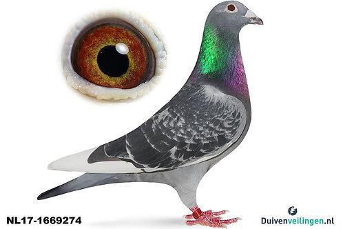 NL17-1669274 (Walpot-Hagens-Buijk)