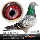 NL-16-1345993.jpg