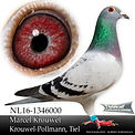 NL-16-1346000.jpg