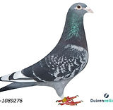 NL-09-1089276.jpg