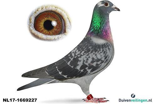 NL17-1669227 (Kuypers-Theelen-Ernest)