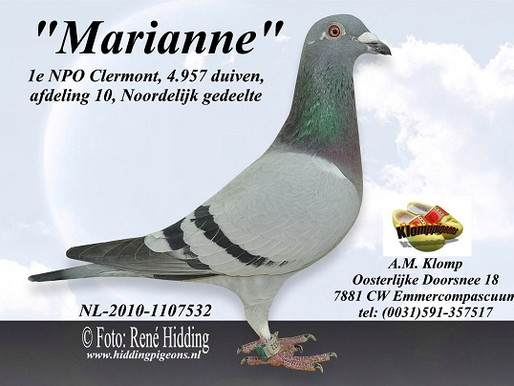 """""""Marianne"""" une acquisition de 1er choix 100% Marcel SANGERS Gagnante de 2 X 1er NPO via Ton KLOMP."""