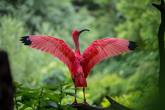 Early Bird - Single Driver