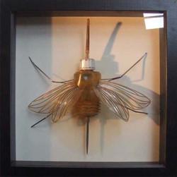 Hyménoptère Burrettidae / (vendu)