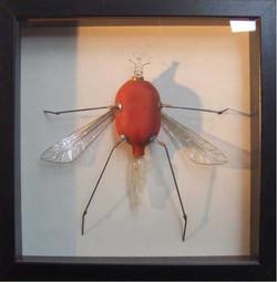 Homptère Poirodae / (vendu)