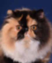 18th best LH cat.jpg