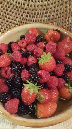 Fruits rouges et des bois ...