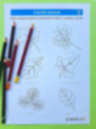 pagina de colorat toamna   pagina de colorat frunze   culori de toamna