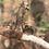 Thumbnail: Корень иван-чая для посадки = 1 шт