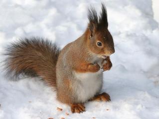 А где белки зимуют? :)))
