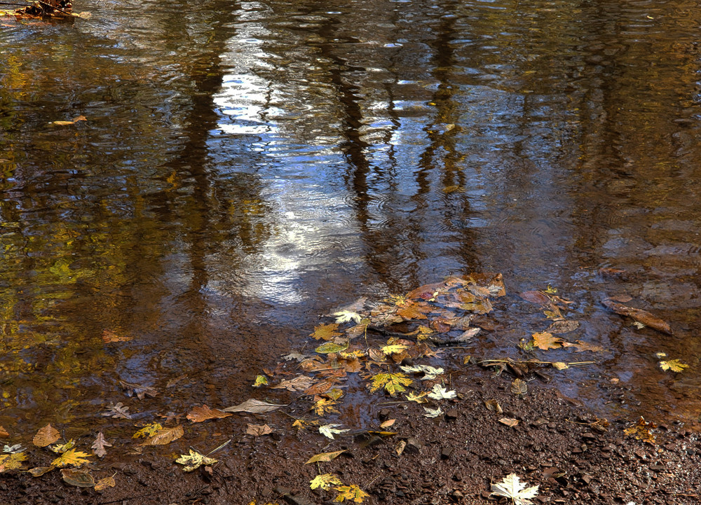 Evansburg State Park, Autumn foliage, reflections in water