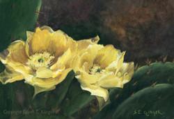 Prickly Pear Beauties_3300c_72