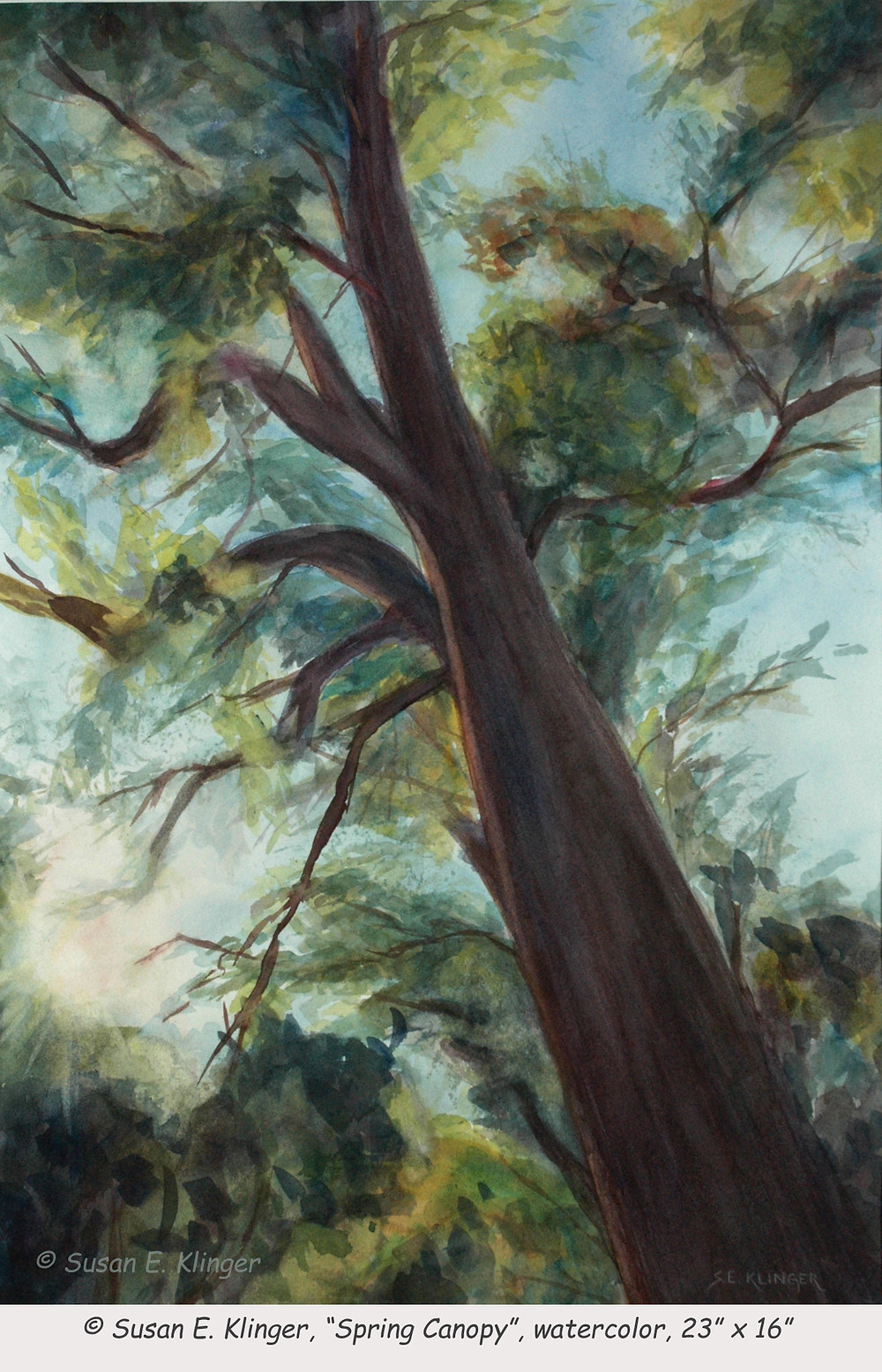 """Spring Canopy"", watercolor"