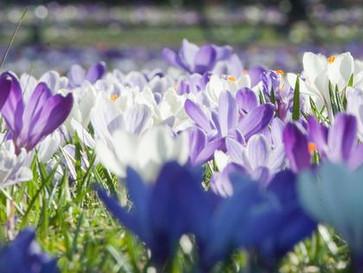 Das pflanzen die Berliner Bezirke zum Frühlingsstart