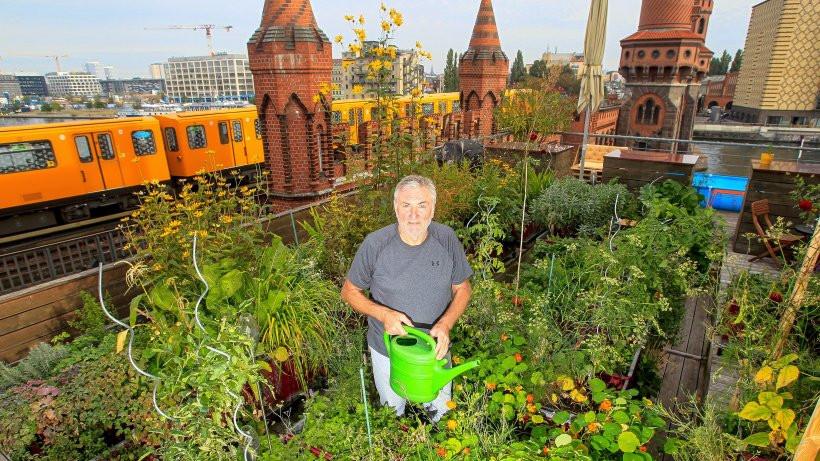 """Der Garten der Strategieagentur """"different"""" erhält einen Preis für den besten Firmengarten auf einem Dach Foto: Joerg Krauthoefer"""