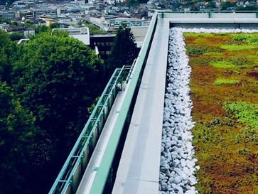 WETTBEWERB: Berlins schönstes Gründach! - jetzt teilnehmen oder später abstimmen