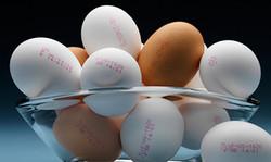 Inkjet VJ1620 eggs