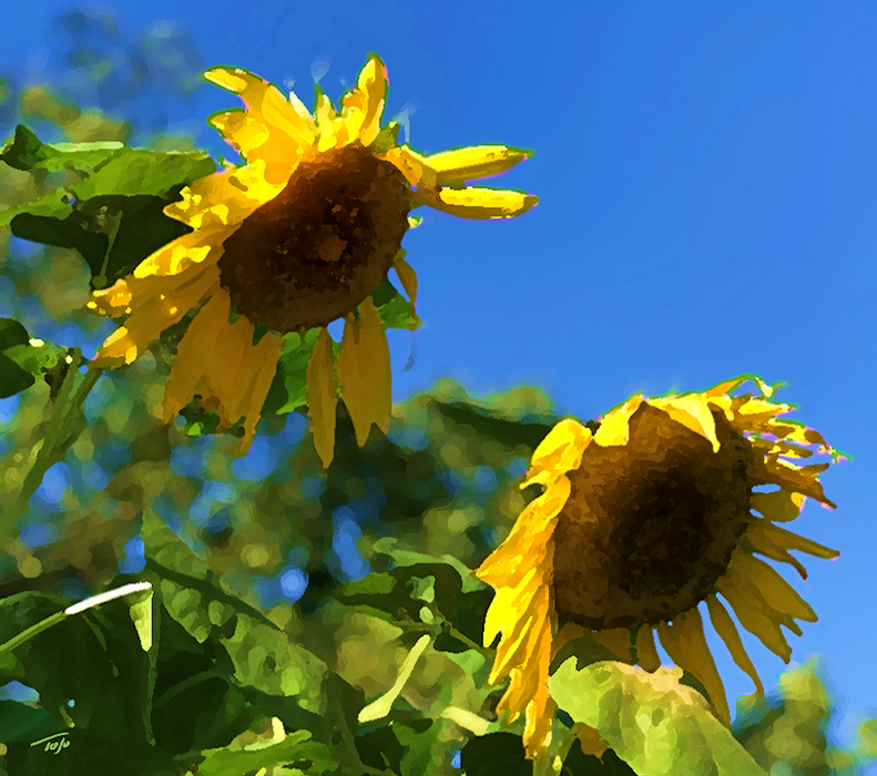 Sunflowers Vox