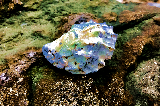 Shell on Jetty