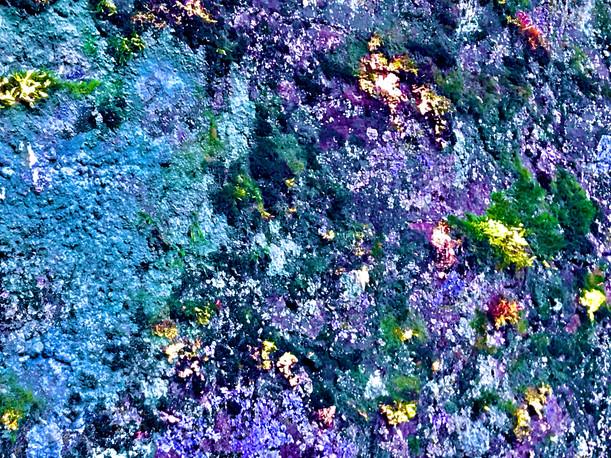 Moss Phosphorescent