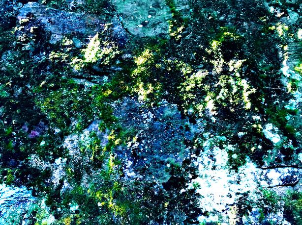 Moss Black Lit