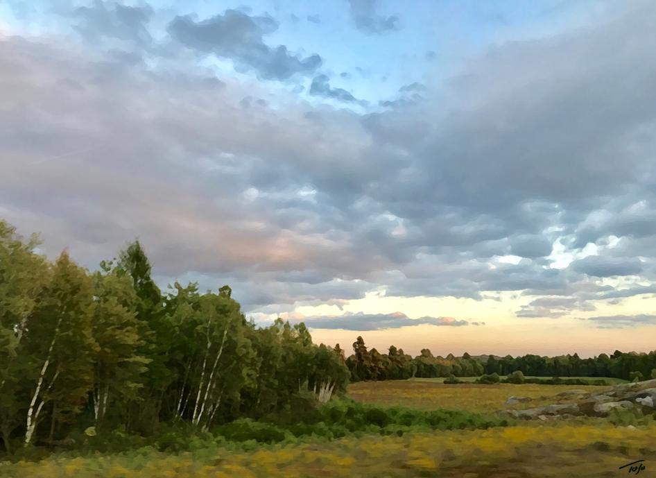 Birch at Sunset